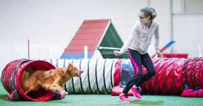 Nyt harrastetaan koiratanssia ja agilitya – näyttelyiden suosio laskee