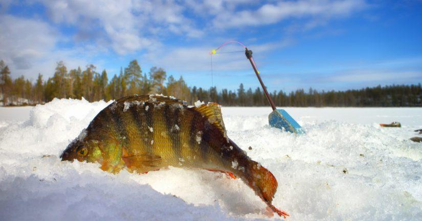 Soveltuvaksi lopetusmenetelmäksi esimerkiksi pienikokoisella kalalla voi riittää myös luja isku päähän.