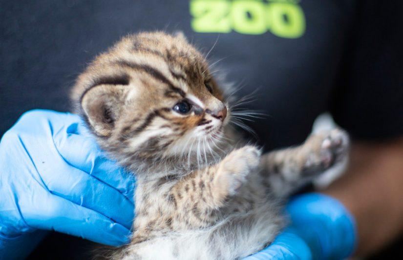 Kuukauden ikäiset pennut pääsivät ensi kerran eläinlääkärin tarkastukseen.
