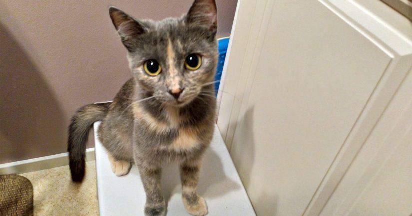Aune vietti ensimmäiset kuukaudet isossa kissapopulaatiossa ja myös kasvuympäristö oli täynnä jatkuvia vaaranpaikkoja.