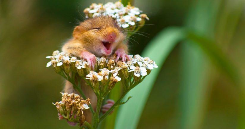 Andrea Zampattin hellyttävä kuva on The Comedy Wildlife Photography Awards -kuvakisan tuotoksia.