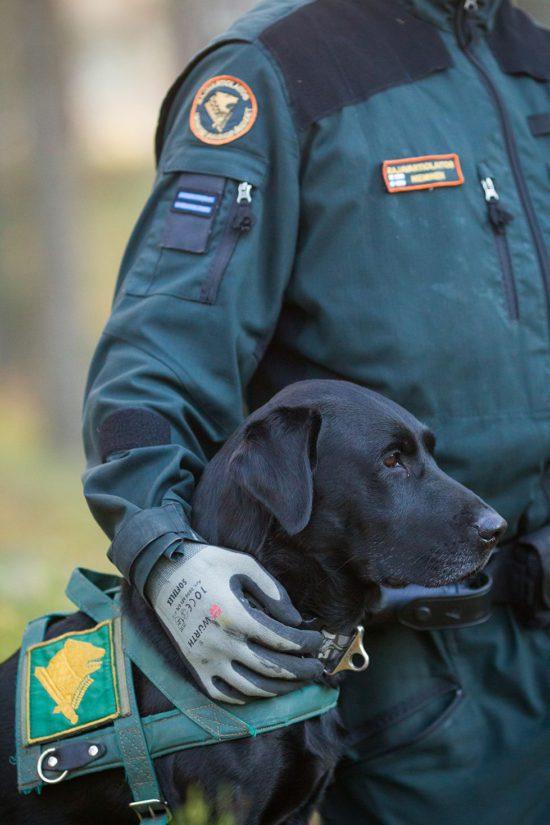 """Vuoden Rajakoira 2016 on labradorinnoutaja Varjoahon Cesaresiepi """"Ceppo""""."""