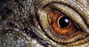 Miksi dinosaurusten valtakausi loppui 66 miljoonaa vuotta sitten – ja miten ne näkyvät vielä nykyajassa?