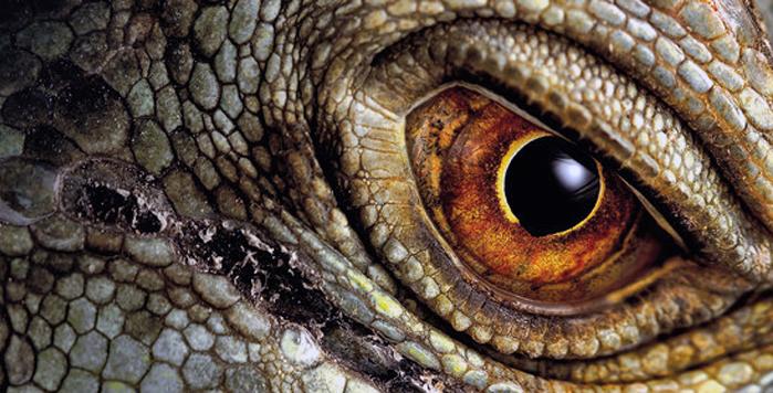 Ensimmäiset dinosaurukset elivät triaskaudella eli noin 240 miljoonaa vuotta sitten.