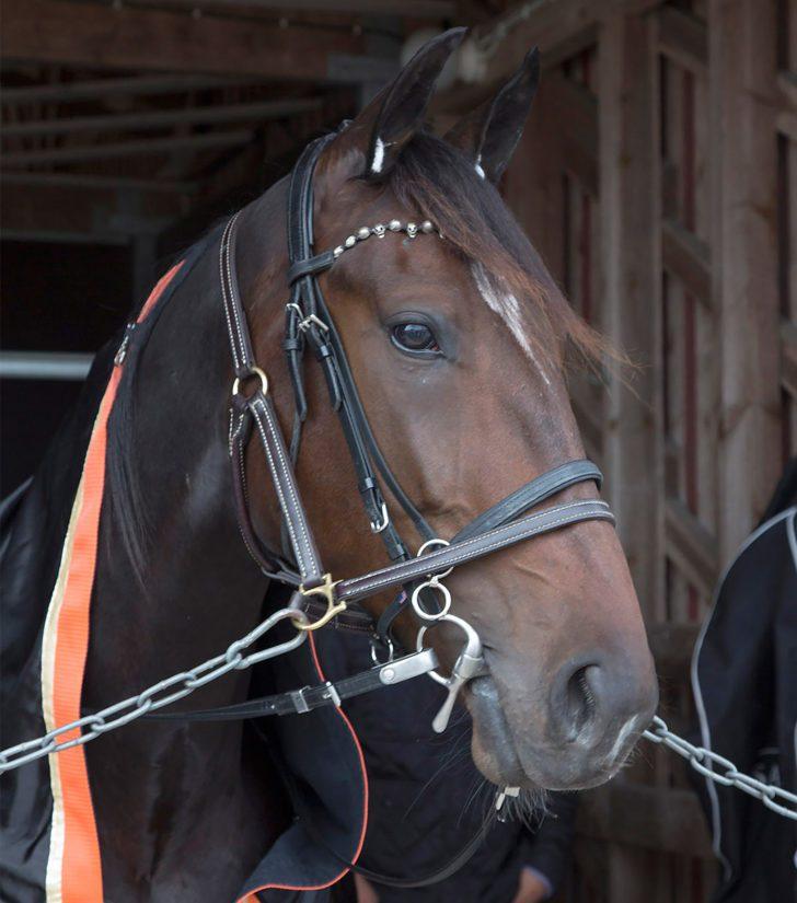 Hevoset saavat elää Katjan ja Jannen valmennuksessa aitoa hevosen elämää. – Tavoitteena on, että valmennuksen ohella hevoset saavat viettää myös keskenään laatuaikaa.