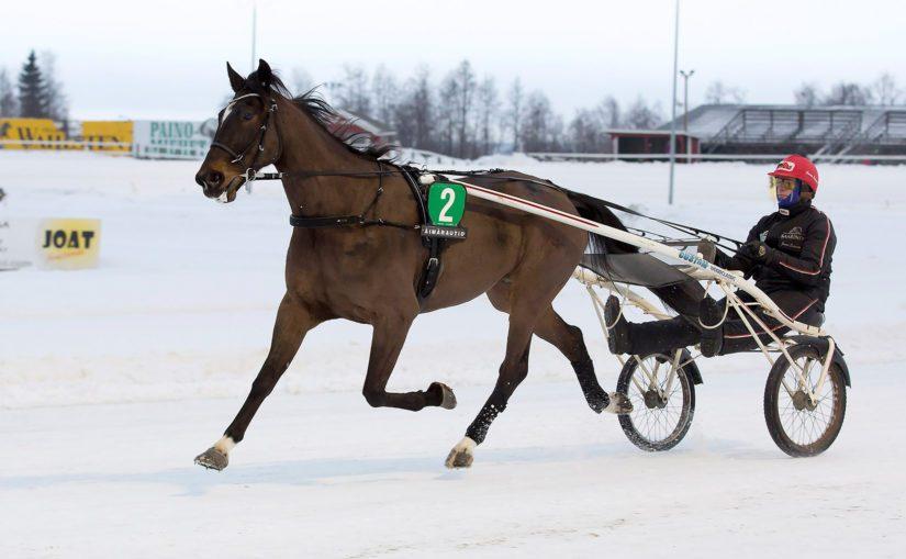 Janne Soronen ohjastaa myös itse Eetua. – Eetu on laiska harjoittelemaan, mutta kova kilpailemaan. Kilpailuvietti on aivan mahdoton.