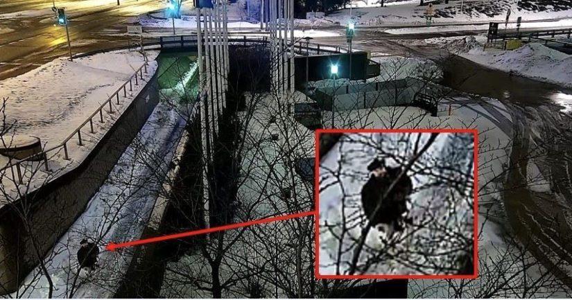 Epäilty valvontakamerakuvassa menossa viemään huumausainetta maastokätköön Helsingissä.