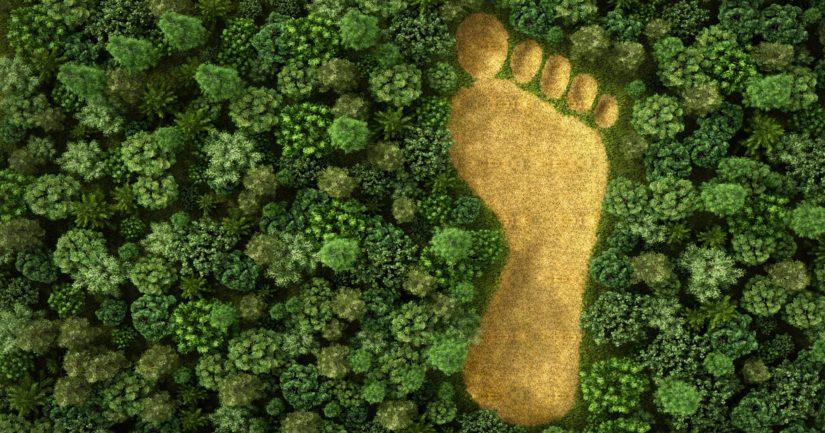 Globaali metsäkadon hillintä on yksi IPCC:n tunnistamista parhaista keinoista ilmastonmuutoksen vastaisessa taistelussa.
