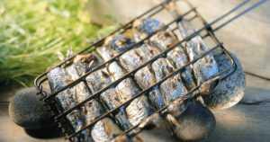 Kala sopii nuotiolla tai grillissä valmistettavaksi – se kypsyy todella nopeasti