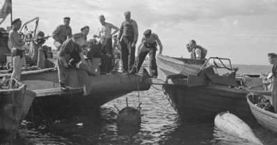 Ei vain ihmisuhreja – toinen maailmansota sytytti myös nykypäivän ympäristöongelmat