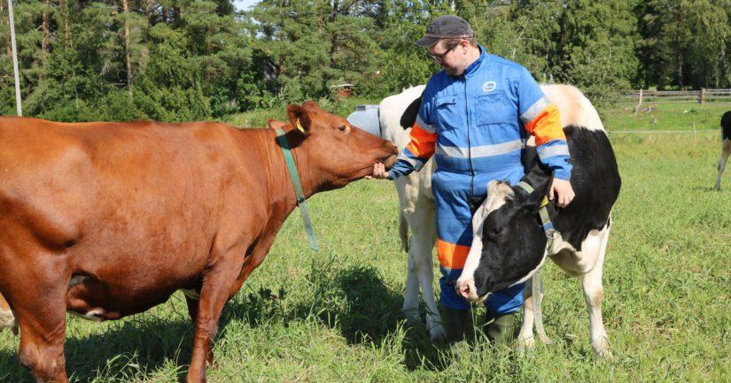 Heikki Rintala sanoo maidontuotannon olevan hänelle sydämen asia. – Lypsykarjatalous ja sen kehittäminen vaatii myös läsnäoloa. Jokainen lehmä on yksilö, joten myös hoidon tulee olla yksilöllistä, Heikki tietää kertoa.