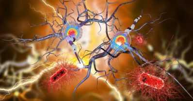 Uusi epilepsian syntymekanismi on löydetty
