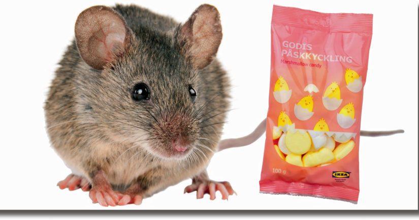 Ikealle kävi ikävästi – hiiret pääsivät pääsiäisvaahtokarkkien tuotantoyksikköön