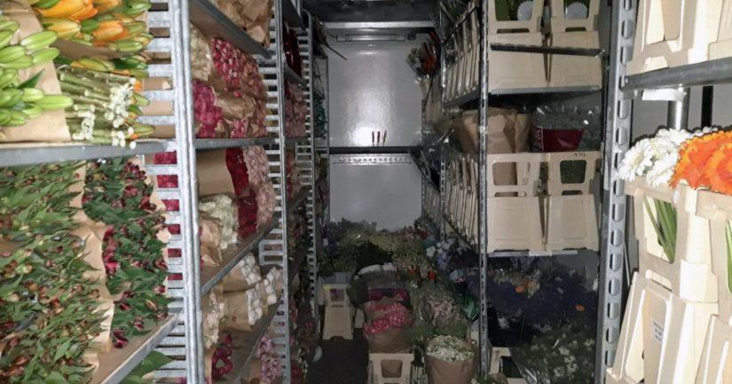 Huumausaineet piilotettiin kukka- ja huonekasvilasteihin, kukkarullakot kuljetettiin Alankomaista rahdin mukana Vuosaaren satamaan.
