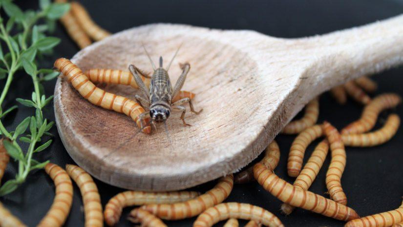 Hyönteiset ovat huomattavasti tutumpia esimerkiksi aasialaisessa keittiössä kuin eurooppalaisessa.