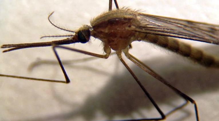 Anopheles daciae -lajiin kuuluvia hyttysiä havaittiin useilta alueilta Suomessa.