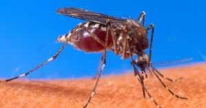 Viranomainen kommentoi kohua hyttysten torjunta-aineista – käytä vain Tukesin hyväksymiä valmisteita