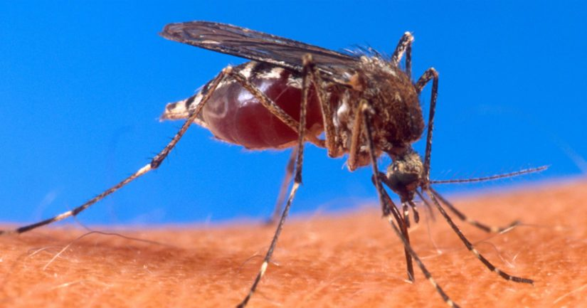 Hyttysiä on maailmalla noin 3 500 eri lajia, joista noin kuusi prosenttia imee verta ihmisistä.