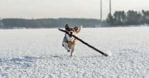Jää haurastuu jopa vuorokaudessa – lumisateen jälkeen on vaikea arvioida jään kantavuutta