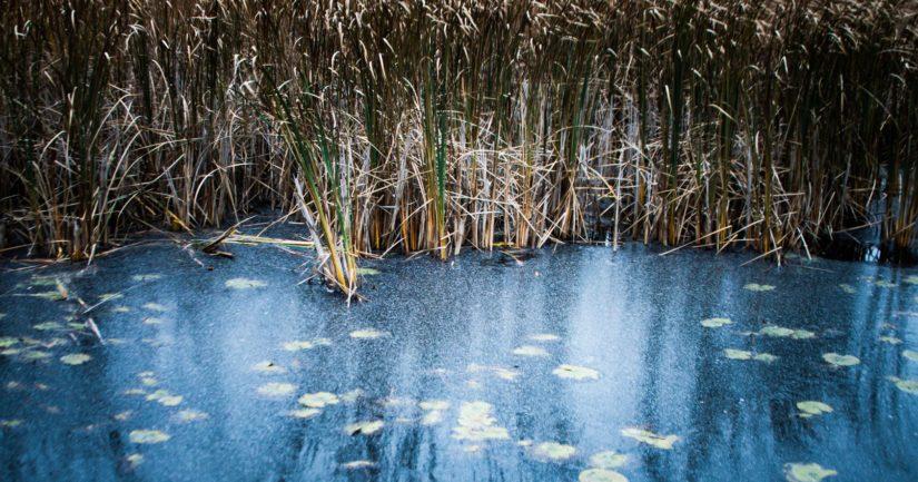Poliisi varoittaa, että lauhan talven vuoksi järvien jää on ohutta ja paikoin sitä ei ole lainkaan.