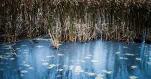 Jäätalvi on alkanut – Ilmatieteen laitos kertoo Perämeren pohjukan lahdissa olevan jo jääpeite