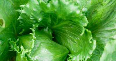 Lähes 400 lasta sai vatsataudin salaatista – sairastumisen syy on ulosteperäinen salmonellabakteeri
