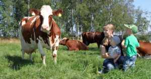 Maidontuotantotilalla ollaan avoimia uuden edessä –