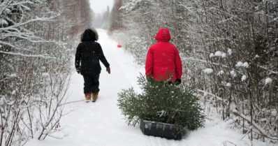 Joulukuusi valtion mailta? – Kyllä vain se onnistuu pohjoisessa, kun muistat mobiililuvan