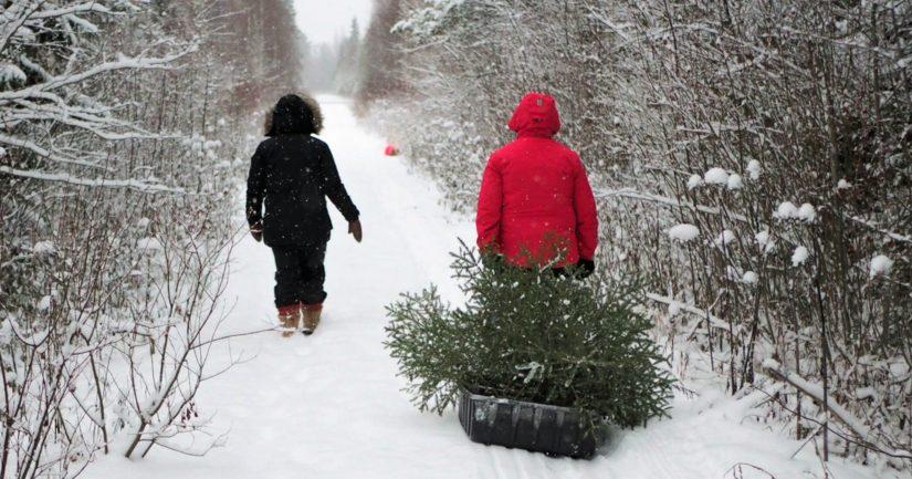 Joulupuu noudetaan tien varresta, korkeintaan parinkymmenen metrin etäisyydeltä.