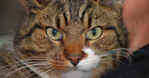 """Jussi-kissan karkumatka kävellen – """"160 kilometriä pitkä kotiinpaluu kesti kuukauden"""""""