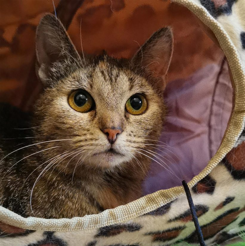 Pelokkaasta ja arasta Justiina-emosta on kuoriutunut kissaneiti, jonka äidinrakkaus on vertaansa vailla.