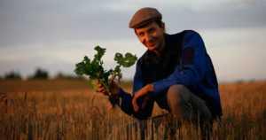 Luomupellot kestävät kuivuutta paremmin – viljelymenetelmät kohentavat maan kasvukuntoa