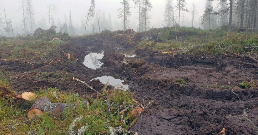Metsähallitus myöntää hakanneensa metsää kiistellyllä alueella Suomussalmen Pata-ahon Luolavaarassa.