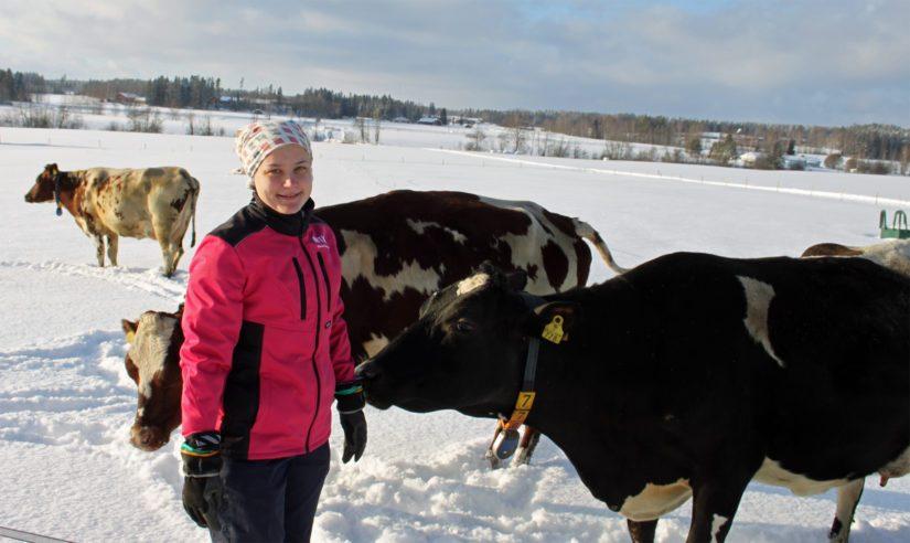 Tilan koko karja pohjautuu kahteen kanta emään, 1950-luvulla häälahjaksi saatuun Inkeri-vasikkaan sekä 1970-luvulla ostettuun Kieloon.