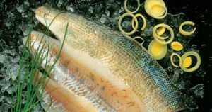 Kalan kanssa aina valkoviiniä? – Rasvaiset kalat kuten lohi ja kirjolohi voi tarjota jopa punaviinin kanssa