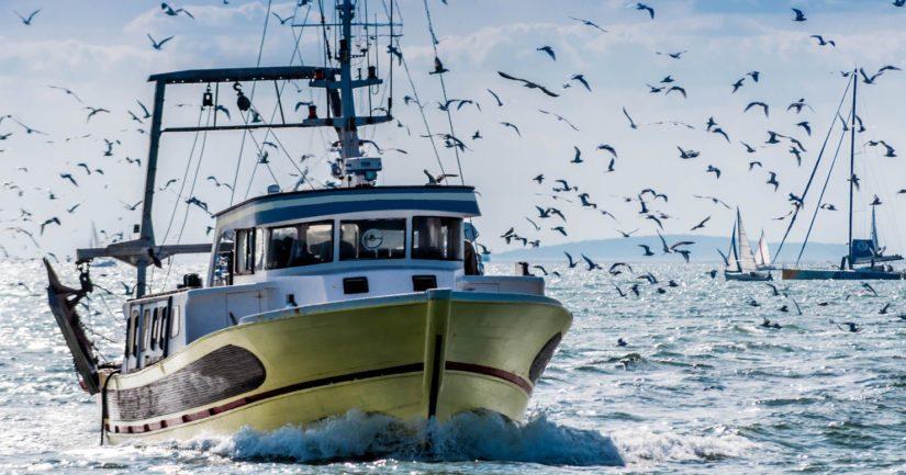 EU:n maatalous- ja kalastusministerit ovat kokoontuneet Luxemburgiin päättämään kalastuskiintiöistä.