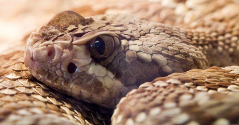 Alustavien tietojen mukaan kyseessä olleet käärmeet olivat kalkkarokäärme, kobra, puukyy sekä kaksi muuta kyykäärmettä.