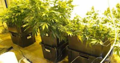 Tulli paljasti – liikemieskaksikolla mittava salakuljetus- ja huumausainebisnes