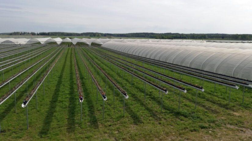 Kasvutunnelit ovat uusi innovaatio Suomen puutarhataloudessa.
