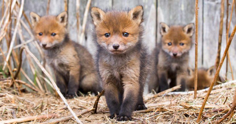 Instagram-taiteilija Ossi Saarisen lähimetsien eläinvalokuvataulut ovat olleet esillä Helsinki Wildlife by Soosseli -näyttelyssä.