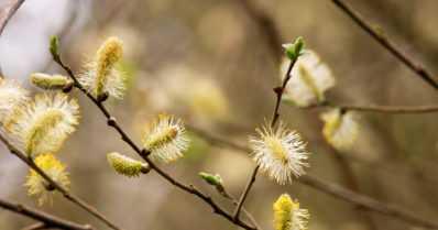 Kevät alkoi etelässä myöhässä – pohjoisessa yli viikon tavanomaista aikaisemmin