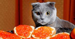 Tämä on Suomen pahin elintarvikeskandaali – kissoista tehtiin margariinia!
