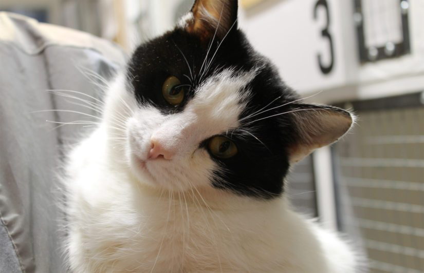 Kissaneito nimeltä Tarja odottaa innolla loppuelämän rakastavaa kotia. Tarja oli löydettäessä huonossa kunnossa, nälkäinen ja valtavan laiha, mutta hyvä hoito on tuottanut toivottua tulosta.