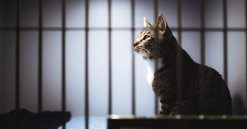 Noin 10 000 kissaa päätyy löytöeläintaloihin, mutta vain joka kymmenes löytökissa haetaan takaisin omaan kotiinsa.
