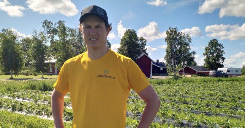 Mansikkafarmari Klaus Karjula ennustaa tämän kesän mansikkasadosta keskimääräistä heikompaa. – Vaikka kaikki muu tehdään taitaen, niin säälle emme voi mitään, Klaus tietää kertoa.