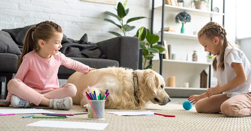 Noin joka kolmannessa tutkimukseen osallistuneessa suomalaiskodissa oli koira.