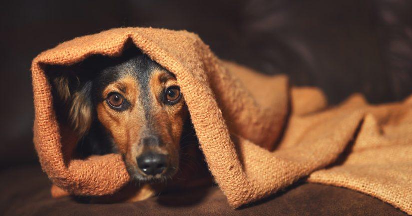 Pelkäävälle koiralle kannattaa järjestää muuta puuhaa rakettien ampumisen ajaksi.