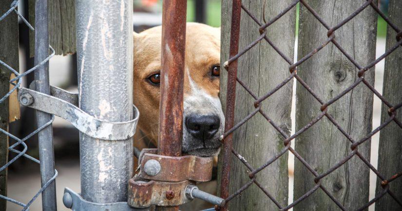 Ihmisten lisääntynyt pahoinvointi ja osattomuus näkyvät eläinten kohtelussa.
