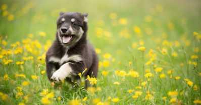 Nauti turvallisesta kesästä koirasi kanssa – asiantuntijan 7 vinkkiä, joilla vältät ikävät sattumat