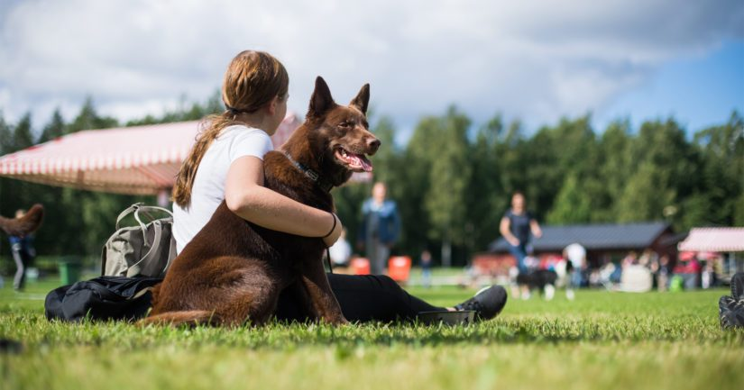 Kaikki koirat kaipaavat aktivointia ja rodunomaista tekemistä.